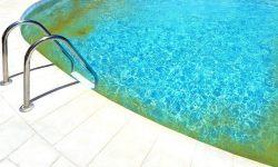 Hogyan szabaduljunk meg az algától a medencében?