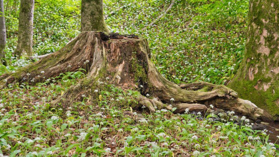 fa gyökér eltávolítás módszerei
