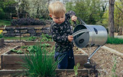 Kertészkedés kezdőknek – Minden amit tudnod kell az induláshoz