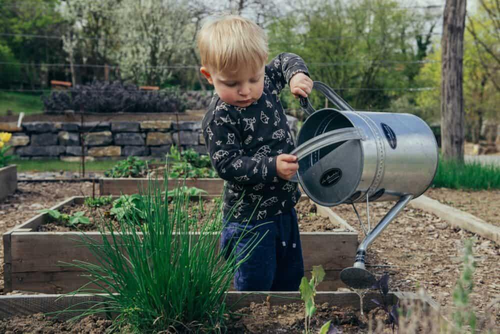 kertészkedés kezdőknek