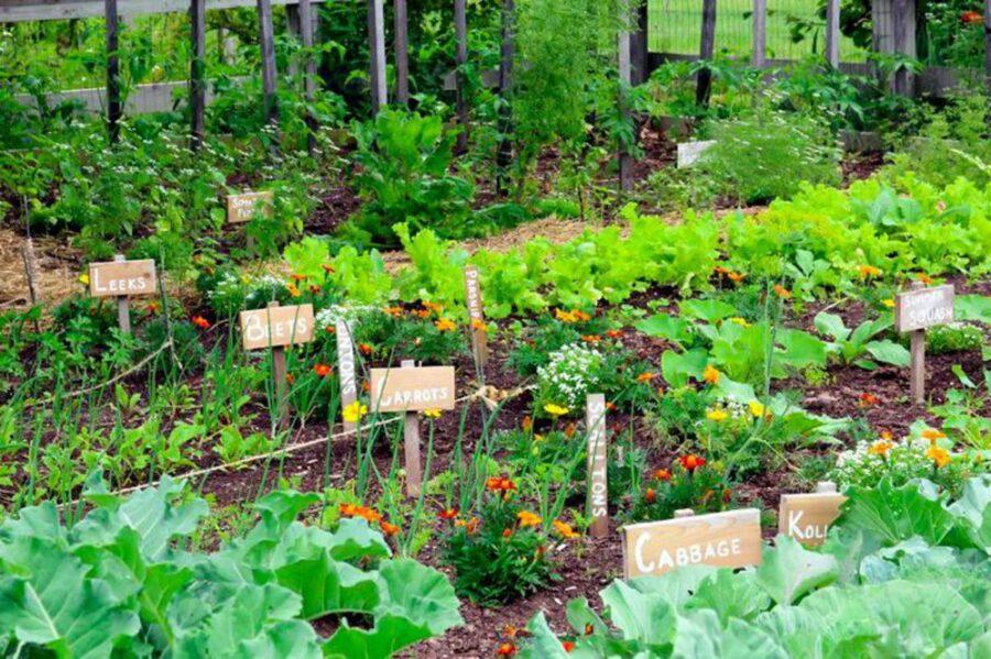 megéri a kertészkedés kezdőknek is