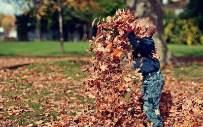 Lombfúvó vagy gereblye – Melyiket használjam? – előnyeik és hátrányaik