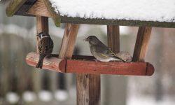 Mivel etessük a madarakat télen?