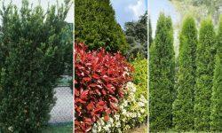10 népszerű Kerítés mellé ültethető növény