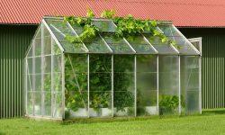 Legjobb kerti Üvegház típusok tesztje: Teljes útmutató a választáshoz